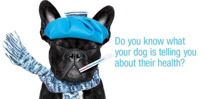 Do you know what your dog is telling you about their health?